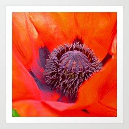 poppy macro IV Art Print