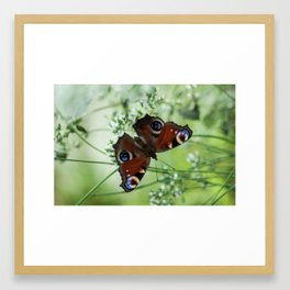 Wildlife Framed Art Print