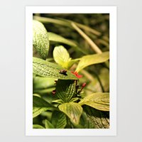 cosima Art Prints featuring Love Bugs by Cosima Higham