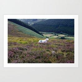Scarr Sheep Art Print