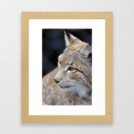 Young lynx close-up portrait Framed Art Print
