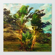 Traveller's Palm Canvas Print