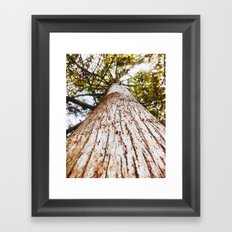 Upwards Tree Photograph Different perspective Macro trees Bark Framed Art Print