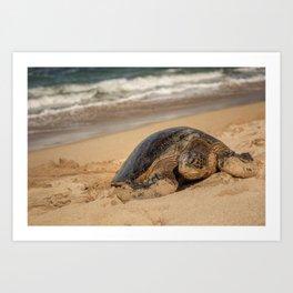 Sea Turtle Maui Art Print