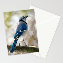 Blue Jay Calling Stationery Cards