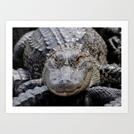 Alligator Portrait Art Print