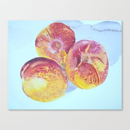 Nectarines Watercolor Painting Canvas Print