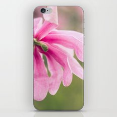The Magnolia Bloomed Yesterday iPhone & iPod Skin