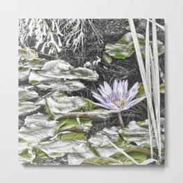 Stunning faded waterlily Metal Print