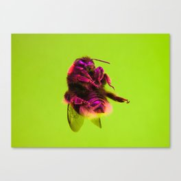 Bugged #33 Canvas Print