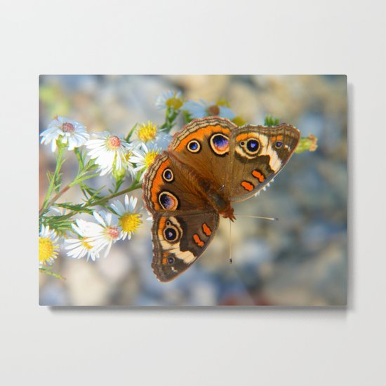 Common Buckeye IV Metal Print