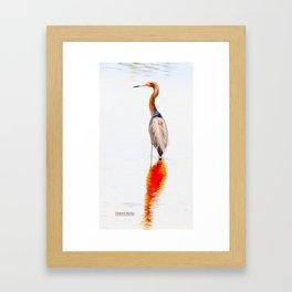 Reddish Egret 9 by Darrell Hutto Framed Art Print