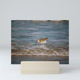Common Sandpiper Mini Art Print