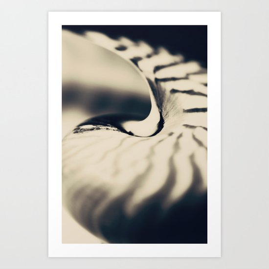 Nautilus No.2 Art Print