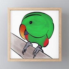 Curious Eclectus Parrot Framed Mini Art Print