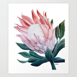King Protea Acrylic Painting Art Print