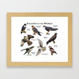 Falcons of the World Framed Art Print