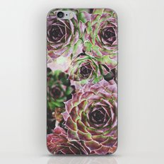 Hens and Chicks iPhone & iPod Skin