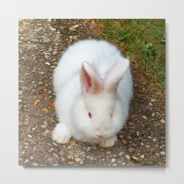 Fluffy white bunny Metal Print