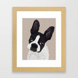 Boston Terrier 2015 Framed Art Print