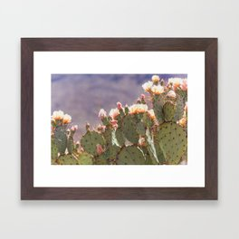 Prickly Pear Blooms I Framed Art Print