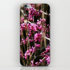 Tiny Pink Blossoms iPhone & iPod Skin