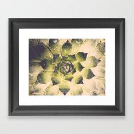 Succulent VI Framed Art Print