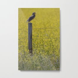 Meadowlark Singing on top of a Fencepost Metal Print