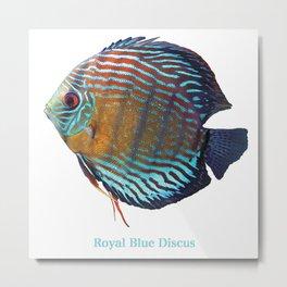Royal Blue Discus Metal Print