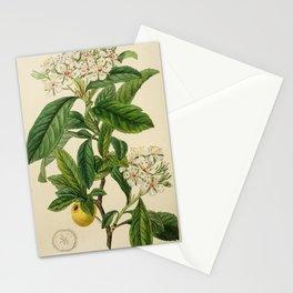 Edwards' botanical register 1836 Stationery Cards
