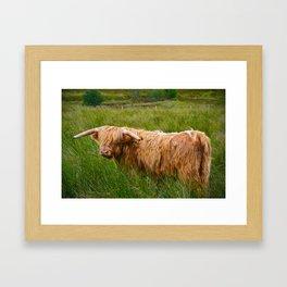 heilan coo Framed Art Print