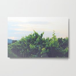 Dusty Vineyard Metal Print