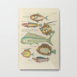 Vintage Fish Illustration IV Metal Print