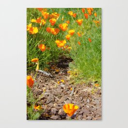 A Walk in the Poppies  Canvas Print