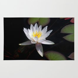 The white nymphaea Rug