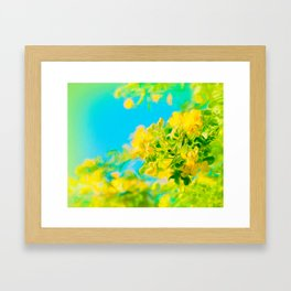 Springtime Cassia Tree Framed Art Print