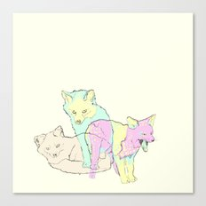 3 Channel Island Foxes Canvas Print