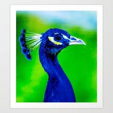 Peacock V Art Print