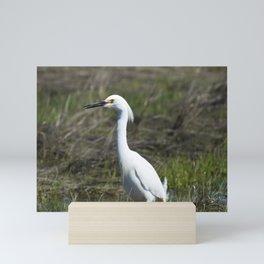 Snowy Egret Mini Art Print