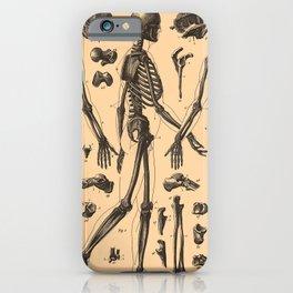 Vintage Human Skeleton Anatomy Diagram (1907) iPhone Case