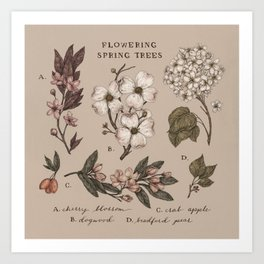 Flowering Spring Trees Art Print