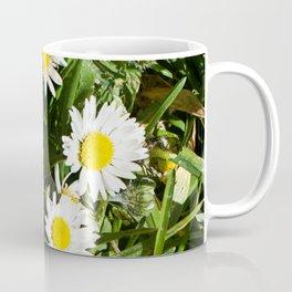 Spring Daisy Photography Print Coffee Mug