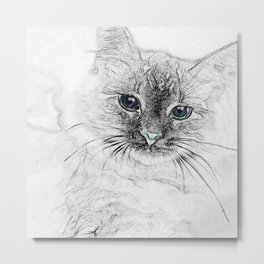 Siberian Kitty Cat Laying on the Marble Slab Metal Print