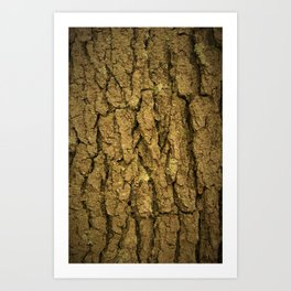Tree_bark Art Print