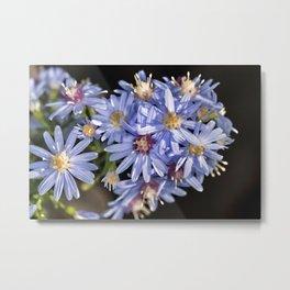 Blue wood aster flowers Metal Print