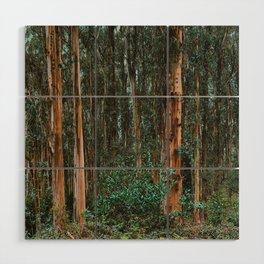 Eucalyptus Trees Near Berkeley California Wood Wall Art