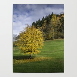 Autumn in Black Forest Poster