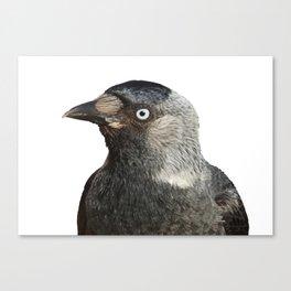 Jackdaw (Corvus monedula) Bird Portrait Vector Canvas Print
