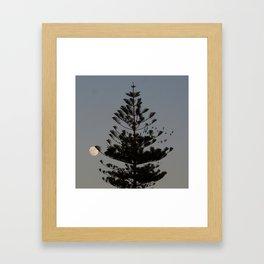 Araucaria tree, full moon, flight of birds Framed Art Print