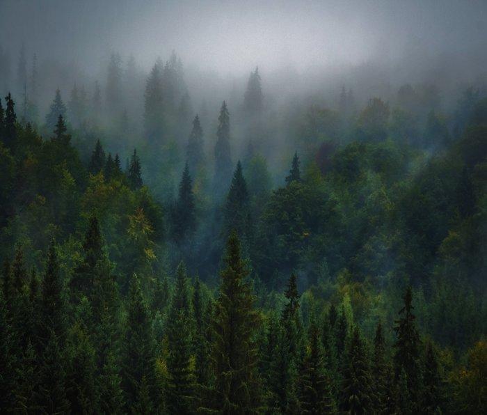 I dream in evergreen Travel Mug
